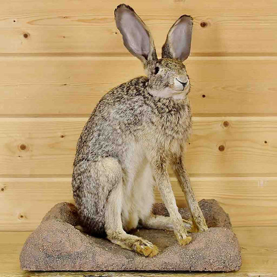 jackrabbit for sale