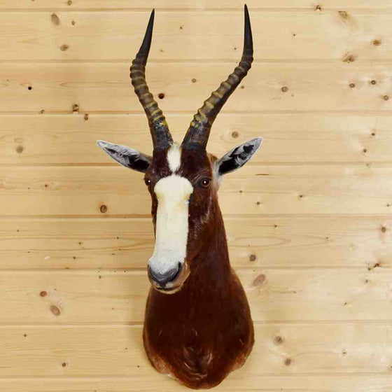 Blesbok Mounts for Sale