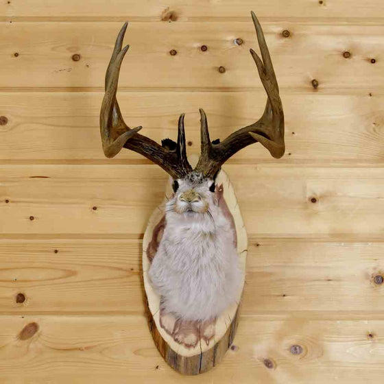 Trophy 8 Point Jackalope Taxidermy Mount - SW6055
