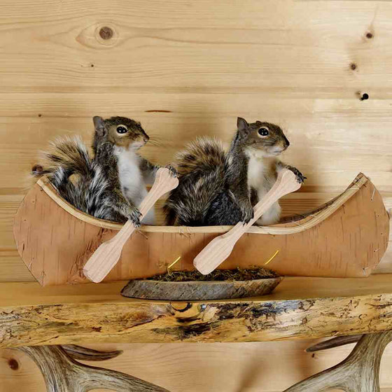 Squirrels in Canoe