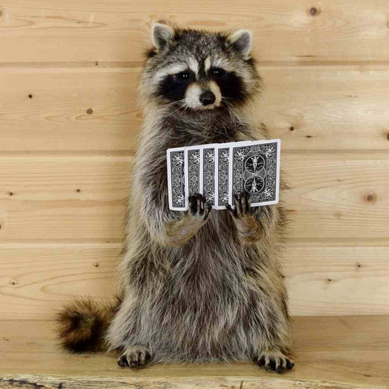 Poker playing raccoon