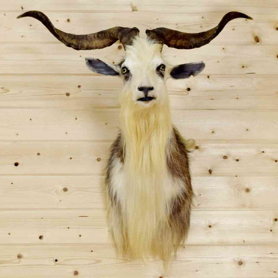 Wild Goat Taxidermy Mount