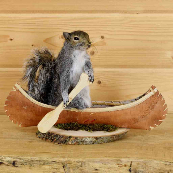 Squirrel Taxidermy