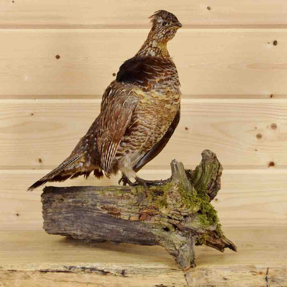 Grouse Taxidermy for Sale