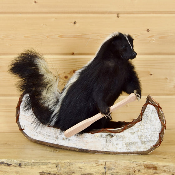 skunk in canoe