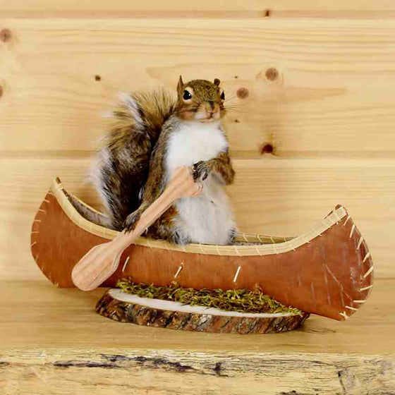 Squirrel in Canoe Taxidermy Mount