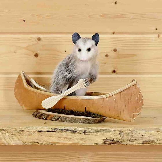 Opossum Taxidermy for Sale