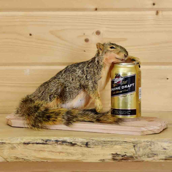 Drunken Squirrel Taxidermy Mount