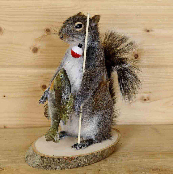 fishing squirrel