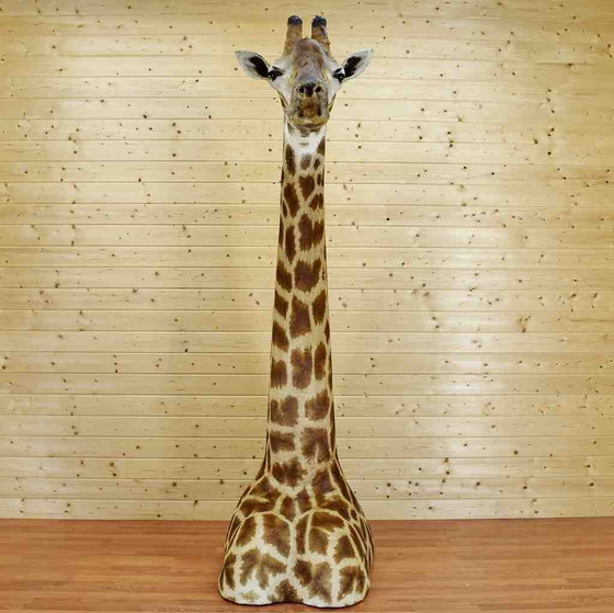 Giraffe Taxidermy Mount