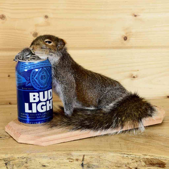 Drunken Squirrel Novelty Taxidermy for Sale
