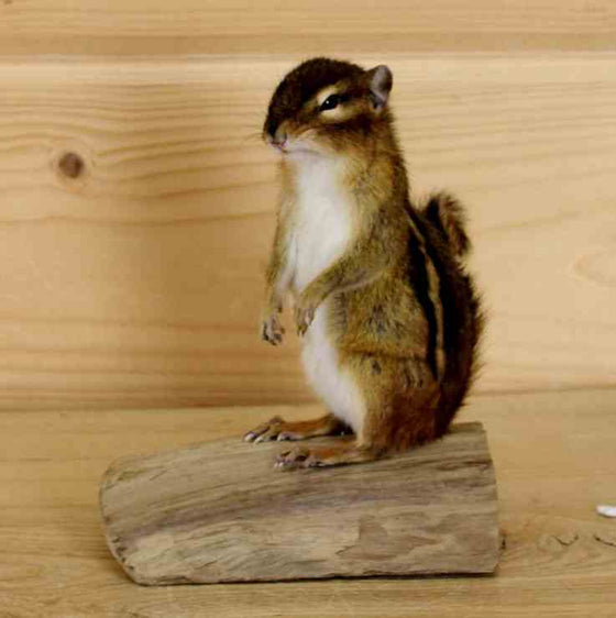 Chipmunk Decor