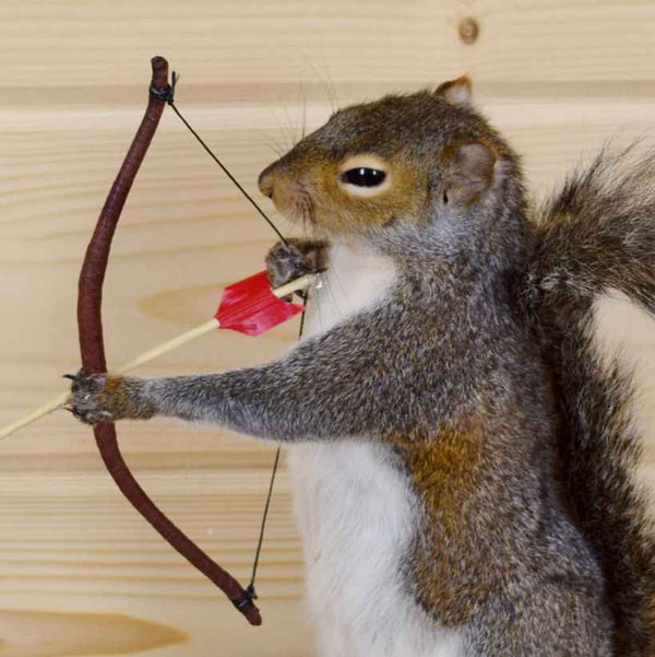 Hunting Squirrel With Bow And Arrow Sw4014 Safariworks
