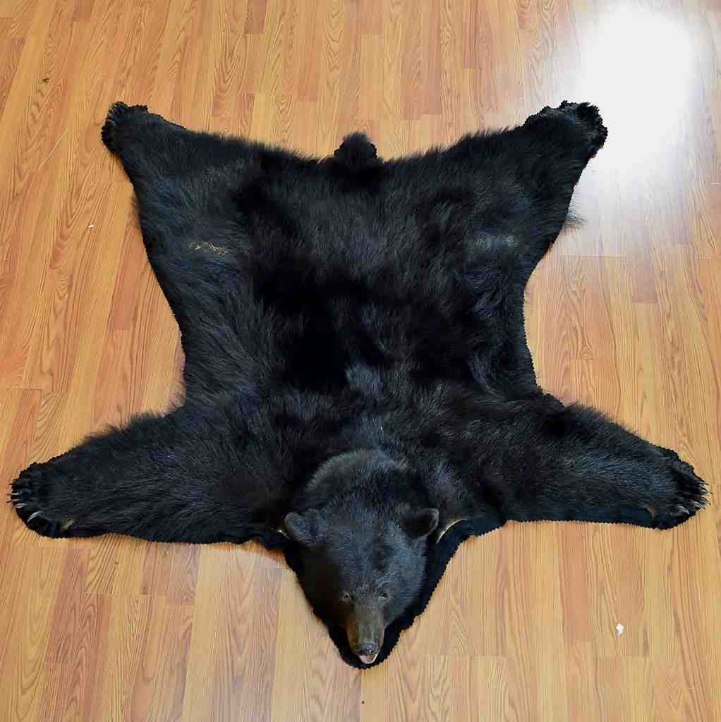 5f1440cbf4 Black Bear Rug In7001 For Sale From Safariworks Taxidermy Sales