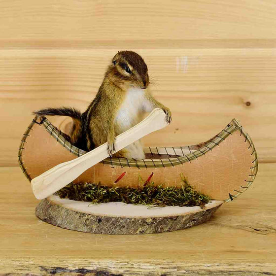 Small Animal Mounts for Sale - Chipmunk
