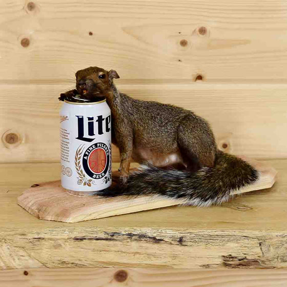 Beer Drinking Squirrel Taxidermy for Sale