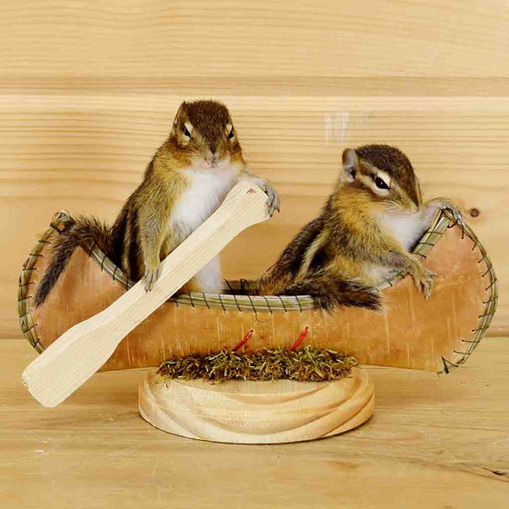 Chipmunks in Canoe