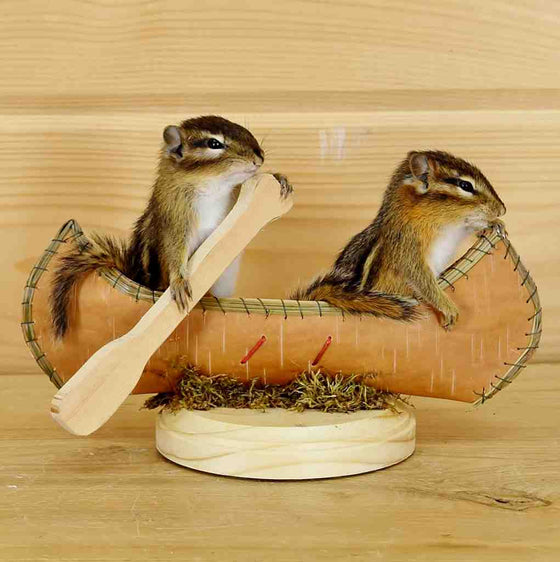 Chipmunks in Canoe Taxidermy Mount - SW6063