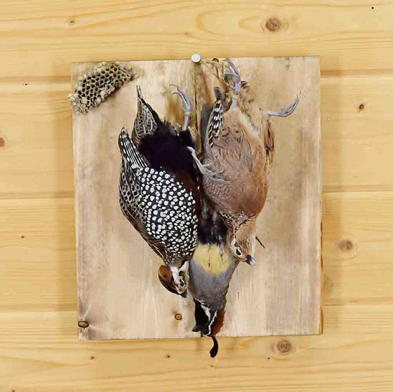 Quail Taxidermy