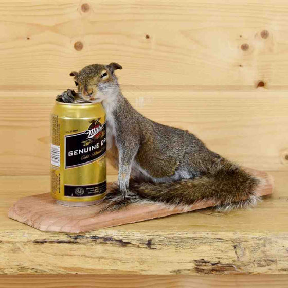 Beer Drinking Squirrel - Novelty Taxidermy