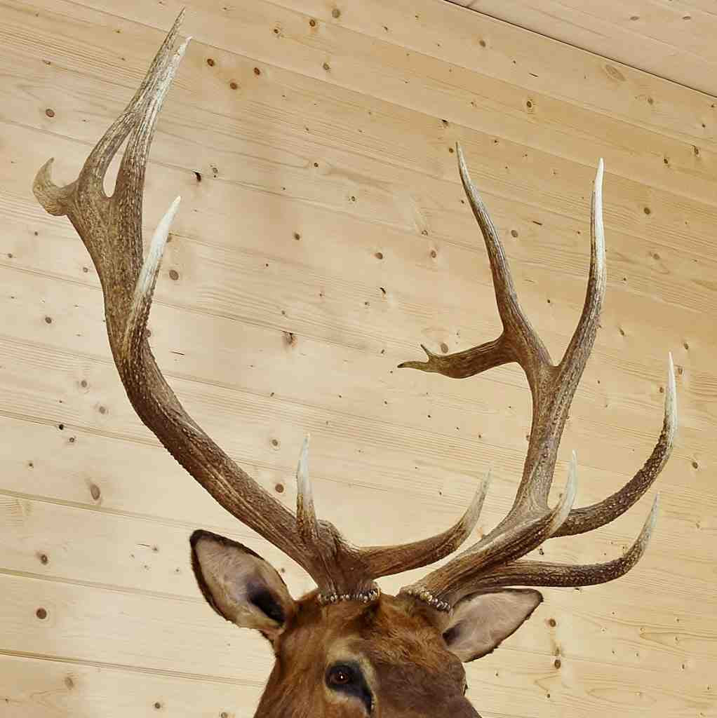 Famous Moose Head Wall Decor Inspiration - The Wall Art Decorations ...