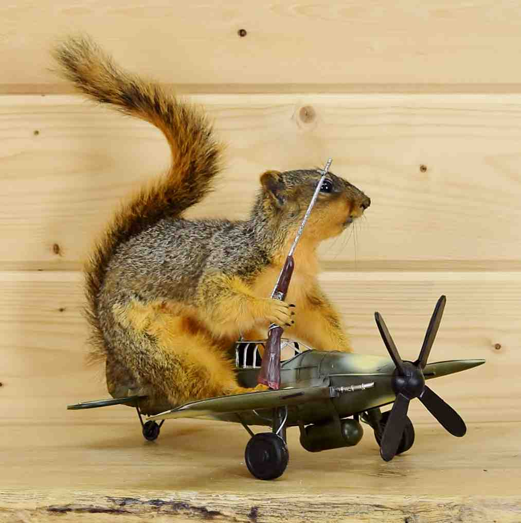 Mounted Flying Fox Squirrel Sw4655 At Safariworks