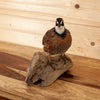 Excellent Perched Bobwhite Quail Taxidermy Mount GB4054