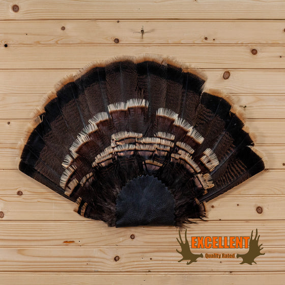 merriam tom turkey tail fan