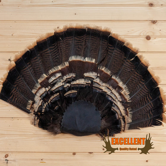 wild tom turkey tail fan for sale
