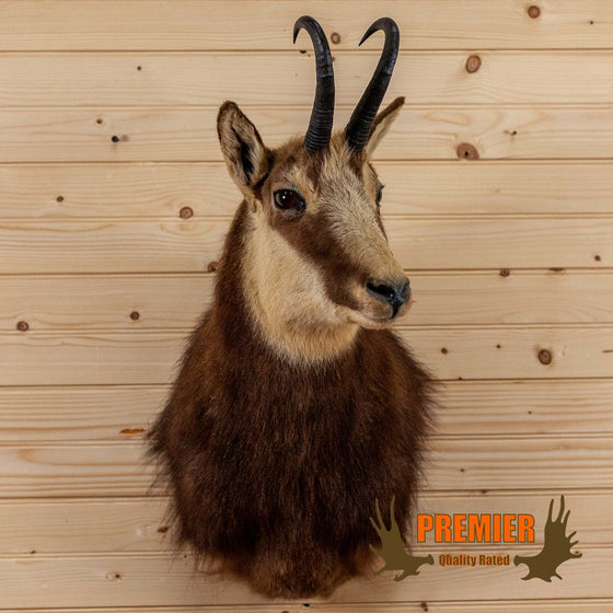 chamois taxidermy shoulder mount for sale safariworks decor