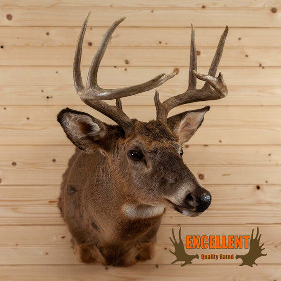 whitetail deer taxidermy mount for sale safariworks decor