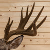 Premier 9X10 Whitetail Buck Deer with Reproduction Velvet Taxidermy Shoulder Mount GB5008