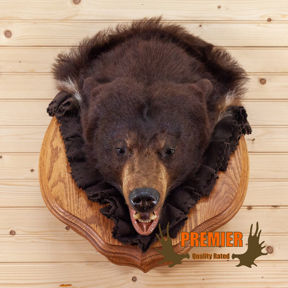 premier black bear head taxidermy mount for sale cinnamon phase