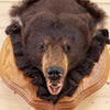 Premier Black Bear Cinnamon Phase Taxidermy Head Mount GB5009