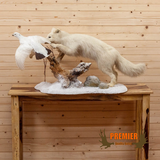 arctic fox chasing ptarmigan lifelike taxidermy mount for sale