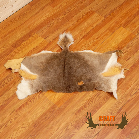craft grade coues deer skin for sale