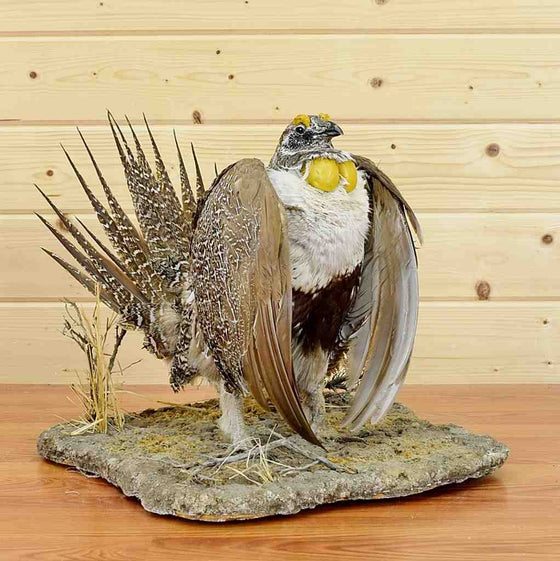 Greater Sage Grouse Mount for Sale