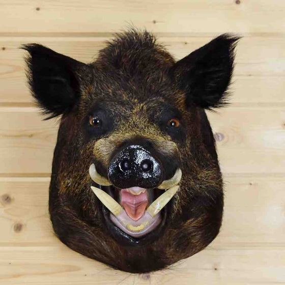 Wild Boar Head Taxidermy Mount