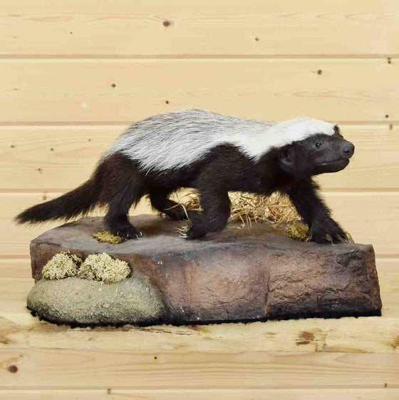 Honey Badger Mounts for Sale