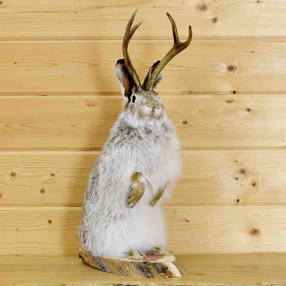 Jackalope Taxidermy Mount for Sale