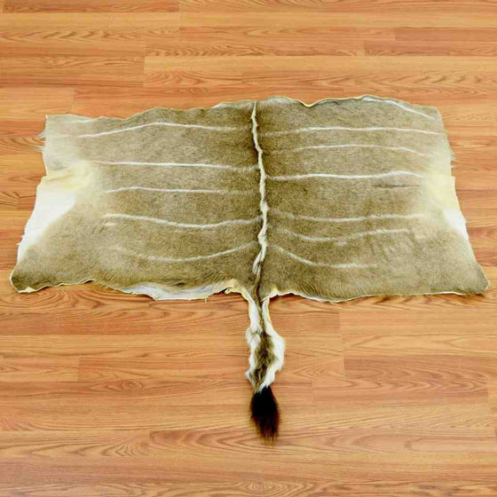 Safariworks Taxidermy Sales Animal Hides Skins And