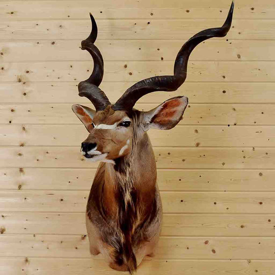 Kudu Taxidermy Mount