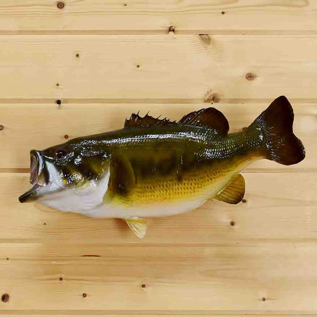 Mounted 19 Quot Real Skin Large Mouth Bass Sw5167