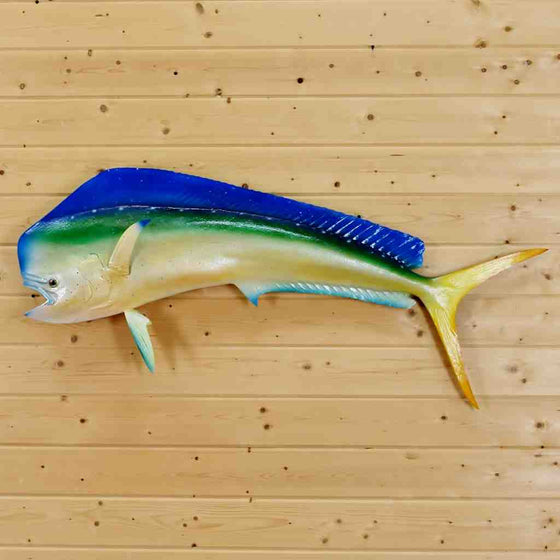Mahi Mahi Reproduction Fish Mount for Sale