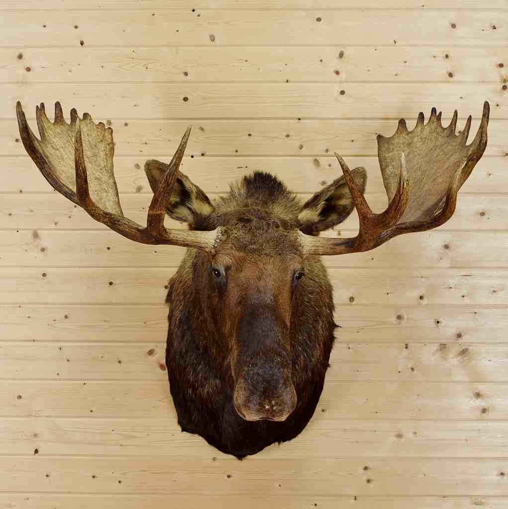 Perfect Moose Wall Decor Component - Wall Art Collections ...