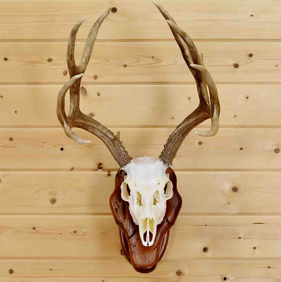 Taxidermy Mounts and Hunting Trophy Heads - Safariworks Taxidermy ...