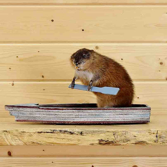 Muskrat Taxidermy in a Boat