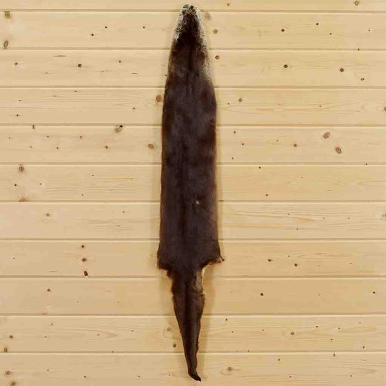 Otter Hide for Sale