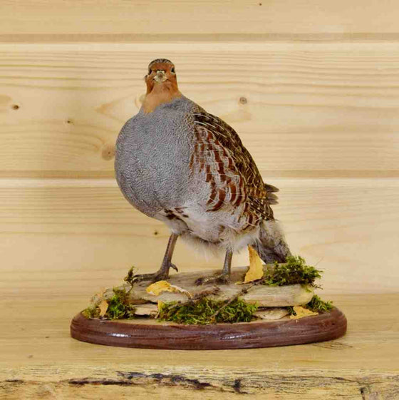 Game Bird Taxidermy Sales