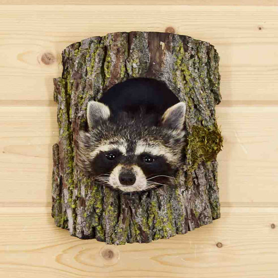 Raccoon Head for Sale